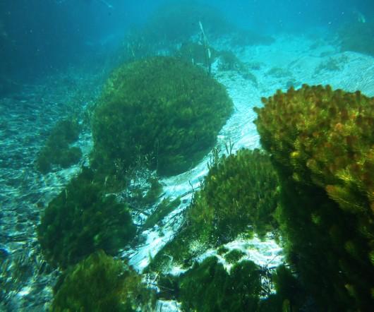 Algas - Rio Sucuri