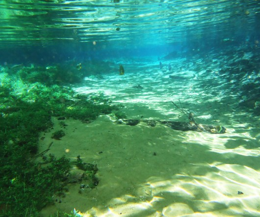 Aquário natural - Rio da Prata