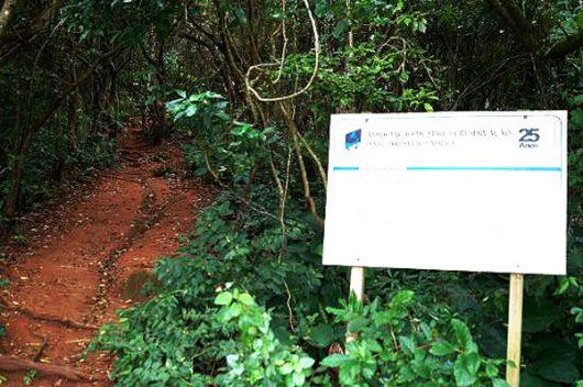 Início trilha Pedra do Urubu - Guarda do Embaú - SC