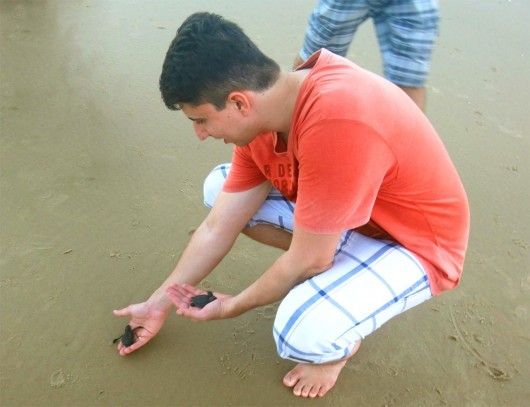 Soltura das tartarugas - Projeto Tamar