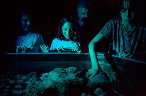 Animais águas profundas