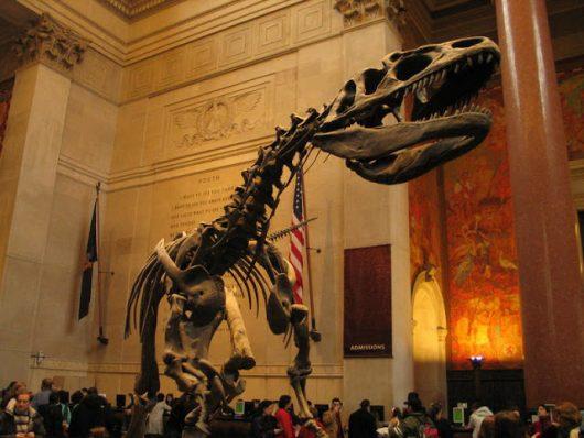 Exposição de dinossauros no Museu Americano de História Natural