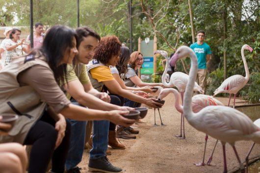 Turistas alimentando flamingos no Parque das Aves