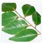 Ervas para desintoxicação do corpo