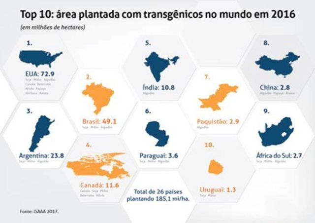 Brasil apresenta maior crescimento global na adoção de transgênicos