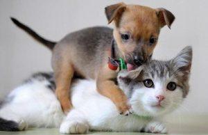 Perdizes receberá feira de adoção animal e manhã de cuidados com pets