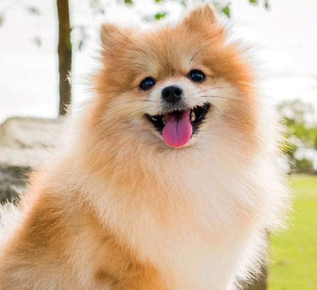 Pets vips: conheça os cães mais caros do mundo