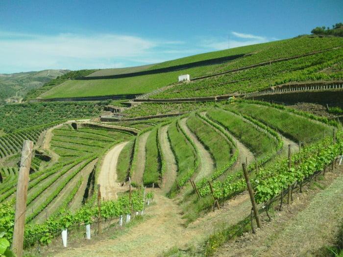 Quinta das Carvalhas - Viticultura Sustentável