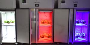 Figura 3. Protótipos produzidos pela Aralab e utilizados nos ensaios realizados na Universidade de Évora