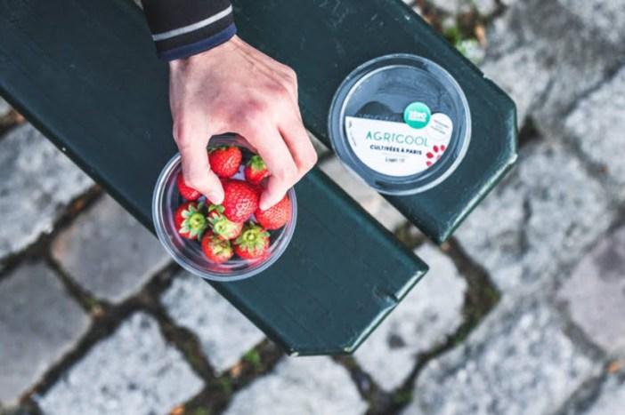 Agricool: empresa francesa usa contentores de mercadorias para cultivar morangos no centro de Paris