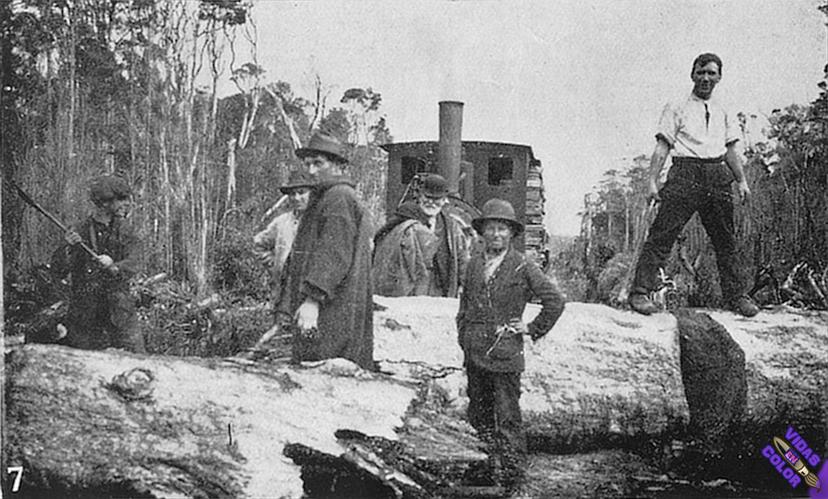 Fallen_tree_blocks_the_Marrawah_Tramway._J_L_Moore_photo_15363451474_byn