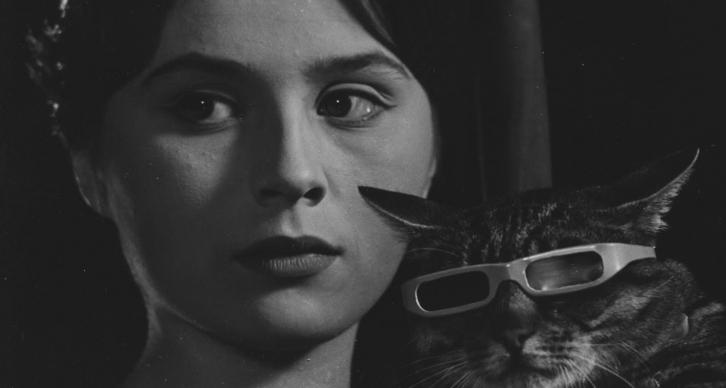 Un jour, un chat – Vojtech Jasny