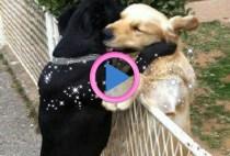 aiuto tra animali