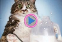 alimentazione gatto