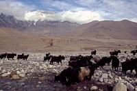 Videonauts Nepal Annapurna Circuit Trekking Kali Gandaki backpacking