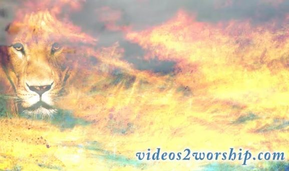 Lion And Clouds Background Video