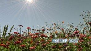 Garden Flowers Worship Motion