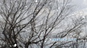 Bare Tree Branches And Falling Snow