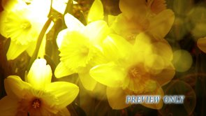 Daffodil Flowers: Mother's Day Loop