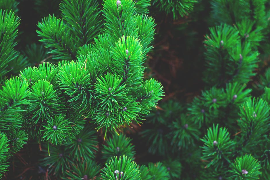 content marketing guide evergreen content