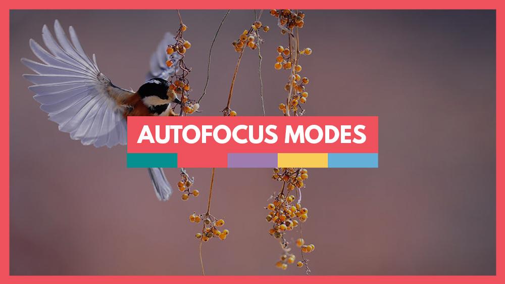 Autofocus modes explained video school online
