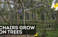 The Art Of Growing Chairs On Trees