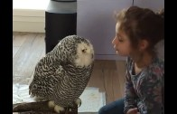 A Loving Bird With Its Human Friend