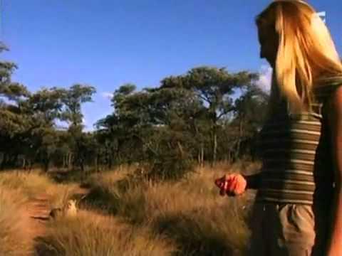 A Brave Woman Teases Wild Cheetahs