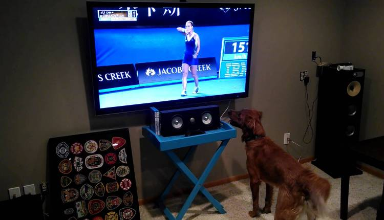 A Dog Loves Watching Tennis
