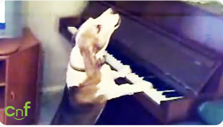 A Dog Playing Piano And Singing