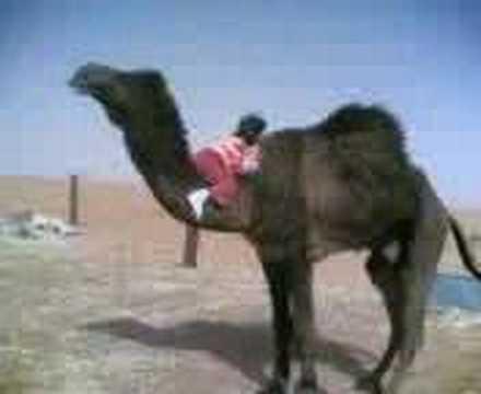 A Kid Climbing A Camel