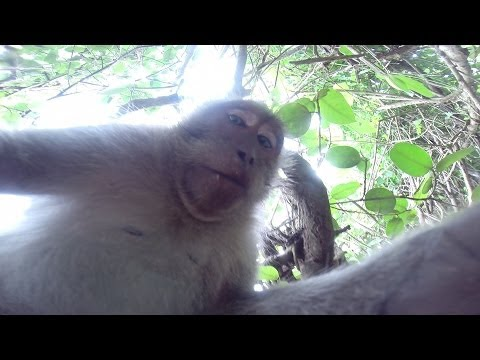 A Monkey Steals A Camera