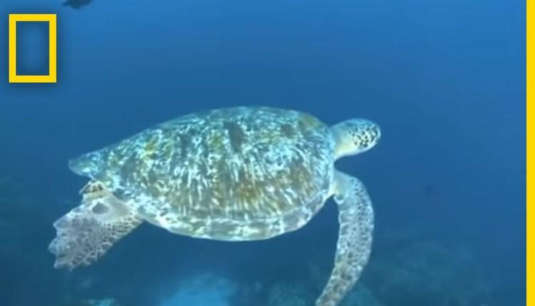 Amazing Turtle Dance