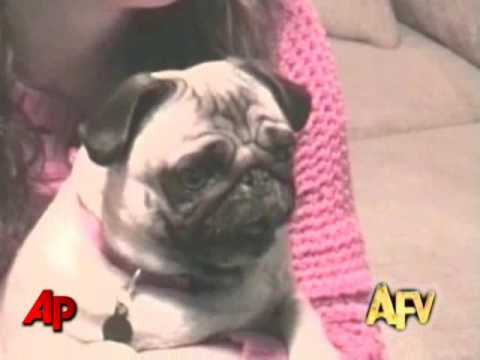 America's Funniest Home Videos Animals Clips