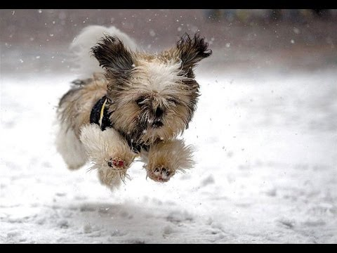 Dogs Playing In Snow Compilation