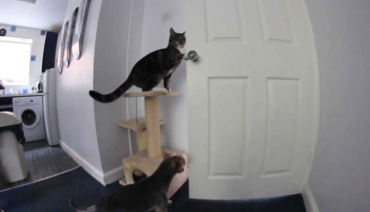 Funny Cat Opens Door For Dog