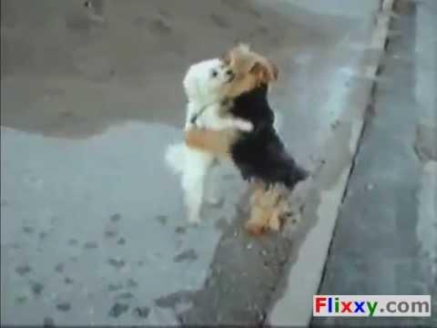 Funny Dancing Mambo Dogs