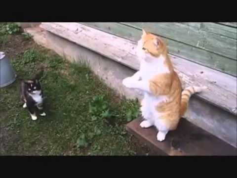 Funny Russian Cats Compilation