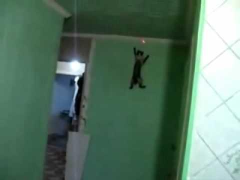 Funny Spider Cat
