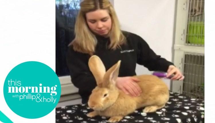 Meet Atlas – The Giant Rabbit