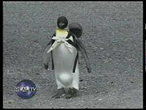 Pet Penguin in Japan