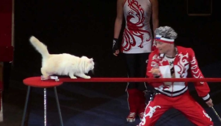 Russian Circus Cats Performance