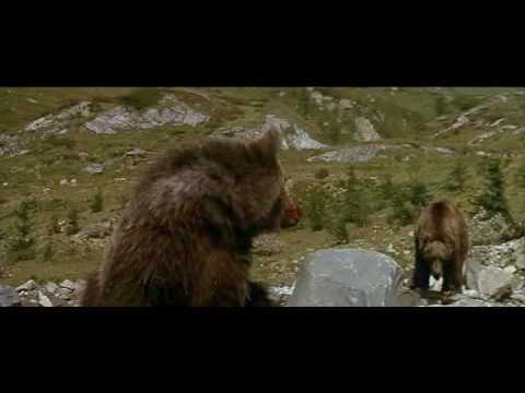 The Bear – A Film By Jean-Jacques Annaud