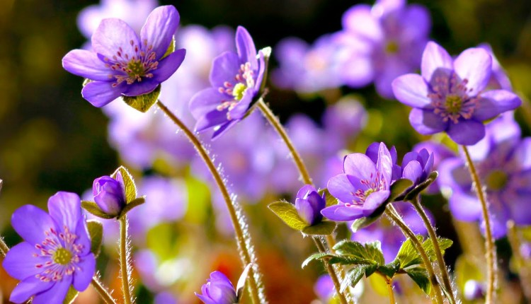 Amazing Nature Plants Growing Blooming Flower TimeLapse