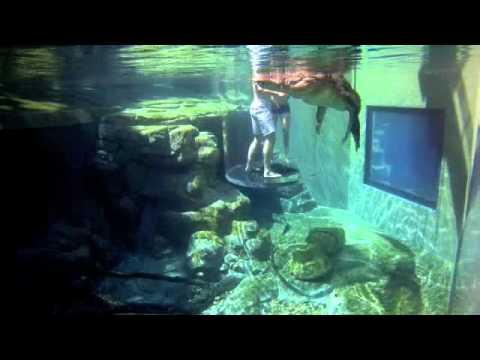 Cage Of Death, Crocosaurus Cove Darwin