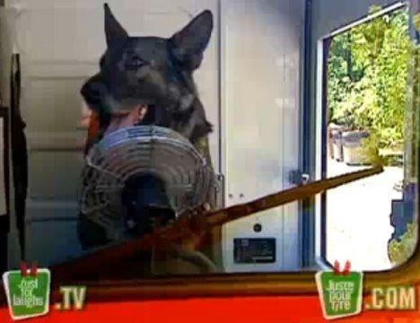 Funny Prank – Driving Dog