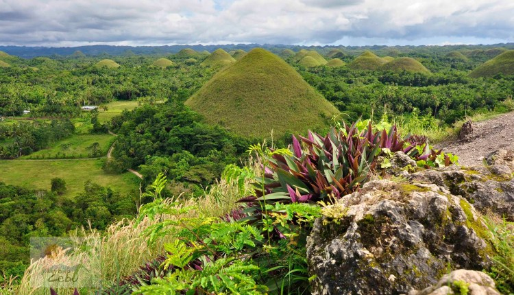 Tourist Attractions Of Bohol