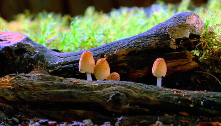 Amazing Video Showing How Fungi Grows