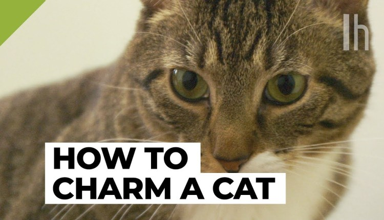 How To Make Any Cat Like You Quickly