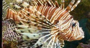 विश्व की सबसे खतरनाक मछली कौन सी हैं